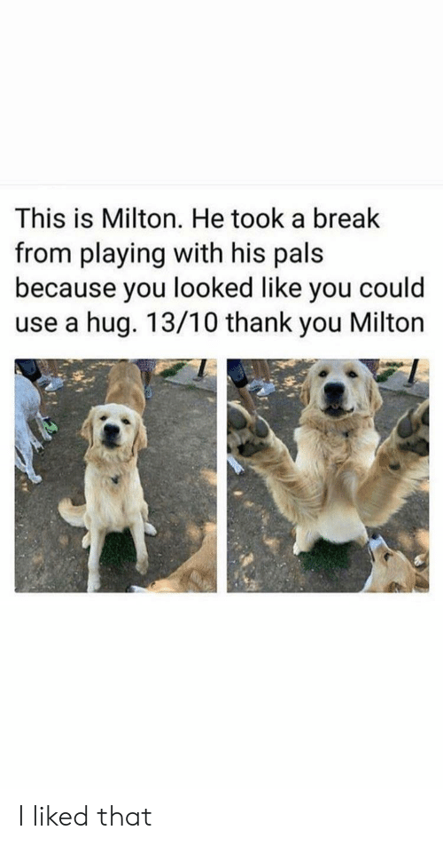I Liked: This is Milton. He took a break  from playing with his pals  because you looked like you could  use a hug. 13/10 thank you Milton I liked that