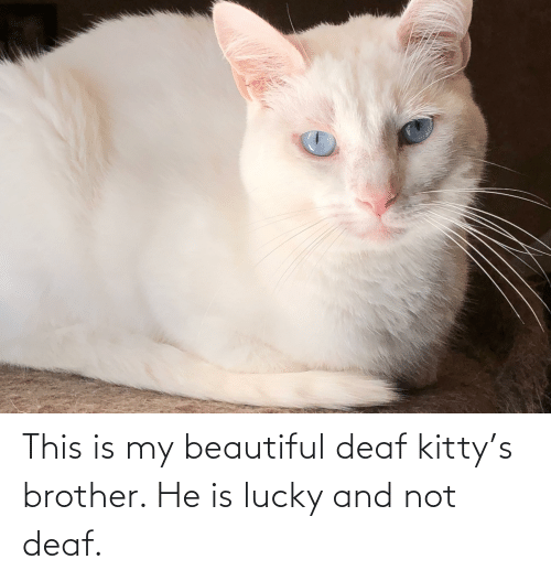 deaf: This is my beautiful deaf kitty's brother. He is lucky and not deaf.