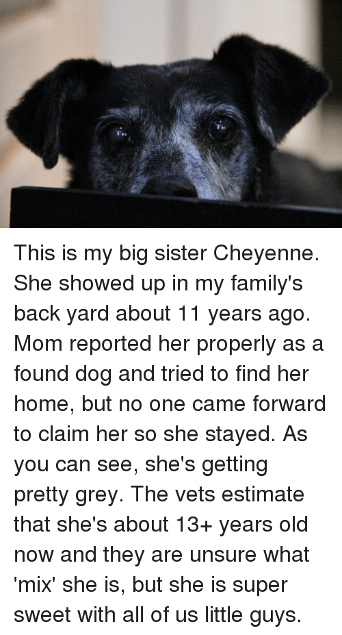 Unsureness: This is my big sister Cheyenne.  She showed up in my family's back yard about 11 years ago.  Mom reported her properly as a found dog and tried to find her home, but no one came forward to claim her so she stayed.  As you can see, she's getting pretty grey.  The vets estimate that she's about 13+ years old now and they are unsure what 'mix' she is, but she is super sweet with all of us little guys.