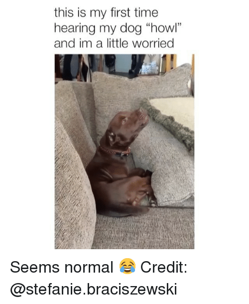 "Im A Little: this is my first time  hearing my dog ""howl""  and im a little worried Seems normal 😂 Credit: @stefanie.braciszewski"