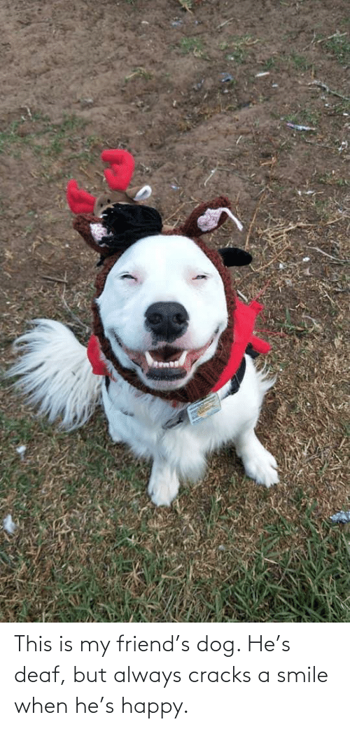 deaf: This is my friend's dog. He's deaf, but always cracks a smile when he's happy.