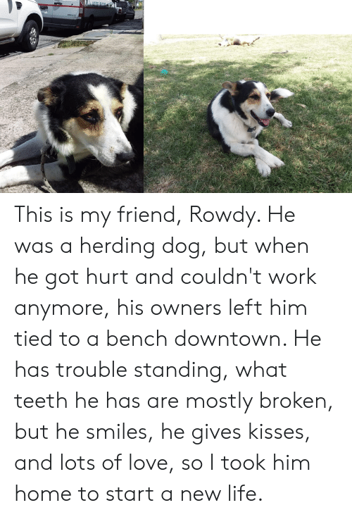 He Smiles: This is my friend, Rowdy. He was a herding dog, but when he got hurt and couldn't work anymore, his owners left him tied to a bench downtown. He has trouble standing, what teeth he has are mostly broken, but he smiles, he gives kisses, and lots of love, so I took him home to start a new life.