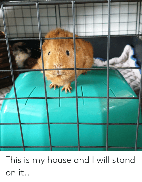 Aww Memes: This is my house and I will stand on it..
