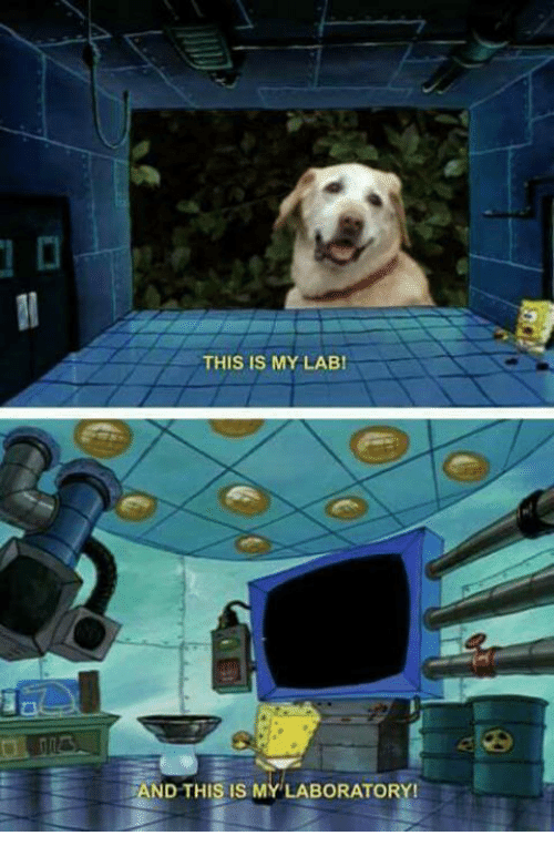 This Is My Lab And This Is My Laboratory