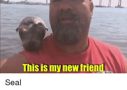 new friend: This is my new friend Seal