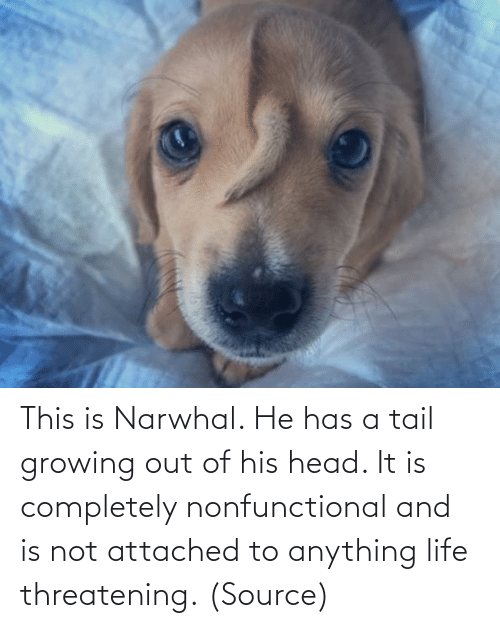 completely: This is Narwhal. He has a tail growing out of his head. It is completely nonfunctional and is not attached to anything life threatening. (Source)