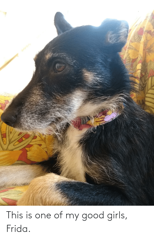 Girls, Good, and Frida: This is one of my good girls, Frida.