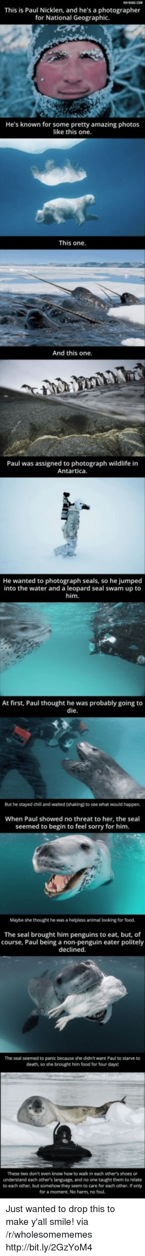 Food, Shoes, and Sorry: This is Paul Nicklen, and he's a photographer  for National Geographic.  He's known for some pretty amazing photos  like this one  This one  And this one.  Paul was assigned to photograph wildlife in  Antartica.  He wanted to  photograph seals, so he jumped  into the water and a leopard seal swam up to  him.  At first, Paul thought he was probably going to  die  But he stayed chil and waited (shaking) to see what would happen,  When Paul showed no threat to her, the seal  seemed to begin to feel sorry for him.  Maybe she thought he was a helpless animal looking for food.  The seal brought him penguins to eat, but, of  course, Paul being a non-penguin eater politely  declined.  The seal seemed to panic because she didn't want Paul to starve to  death, so she brought him food for four days  These two don't even know how to wak in each other's shoes or  understand each others language, and no one taught them to relate  to each other, but somehow they seem to care for each other, If only  for a moment. No harm, no foul. Just wanted to drop this to make y'all smile! via /r/wholesomememes http://bit.ly/2GzYoM4
