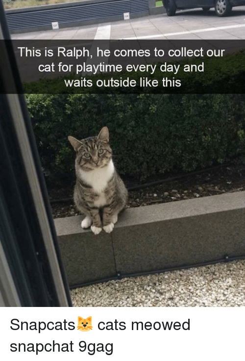 9gag, Cats, and Memes: This is Ralph, he comes to collect our  cat for playtime every day and  waits outside like this Snapcats🐱 cats meowed snapchat 9gag