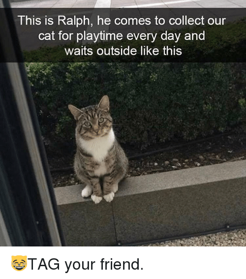 Memes, 🤖, and Cat: This is Ralph, he comes to collect our  cat for playtime every day and  waits outside like this 😸TAG your friend.