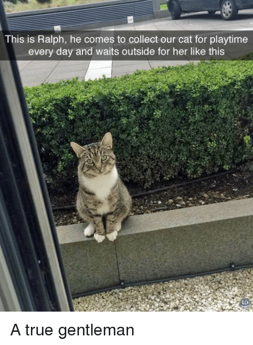 True, Her, and Cat: This is Ralph, he comes to collect our cat for playtime  every day and waits outside for her like this  to A true gentleman