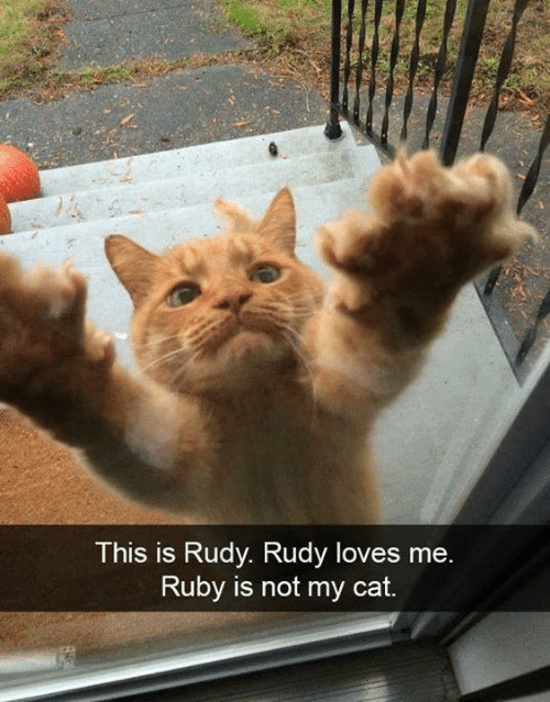 Memes, 🤖, and Ruby: This is Rudy. Rudy loves mee  Ruby is not my cat.