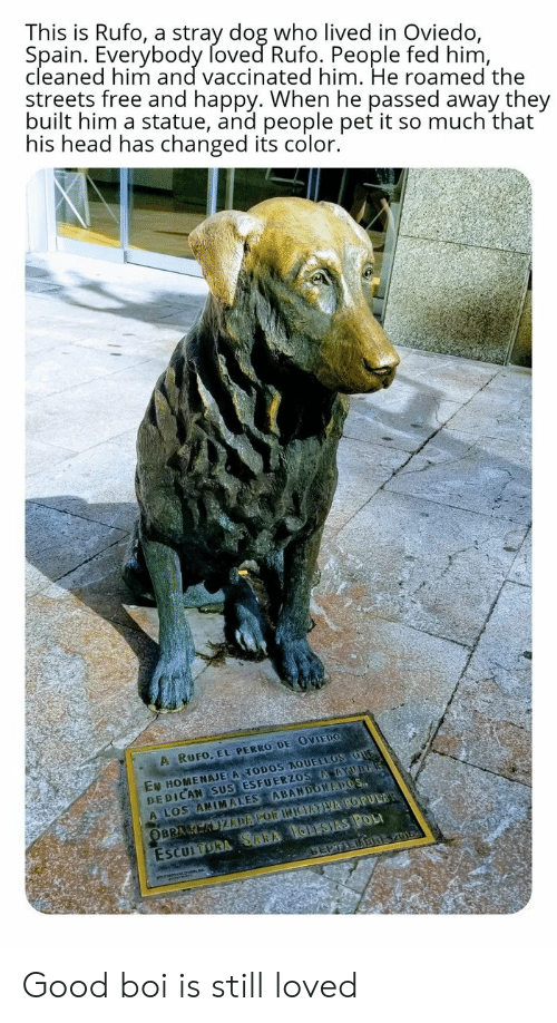 So Much That: This is Rufo, a stray dog who lived in Oviedo,  Spain. Everybody foved Rufo. People fed him,  cleaned him and vaccinated him. He roamed the  streets free and happy. When he passed away they  built him a statue, and people pet it so much that  his head has changed its color.  A RUFO, EL PERRO DE OVIEDO  EN HOMENAJE A TODOS AQUELLOS OUG  DEDICAN SUS ESFUERZOS AAYUDA  A LOS ANIMALES ABANDONAPOS  ESCULTORA SARA IGLESIAS POL  SEPTEDBREV01  OBRA K KIZDAPOR INIEATVA POPULAR Good boi is still loved