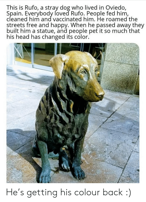 Colour: This is Rufo, a stray dog who lived in Oviedo,  Spain. Everybody foved Rufo. People fed him,  cleaned him and vaccinated him. He roamed the  streets free and happy. When he passed away they  built him a statue, and people pet it so much that  his head has changed its color. He's getting his colour back :)