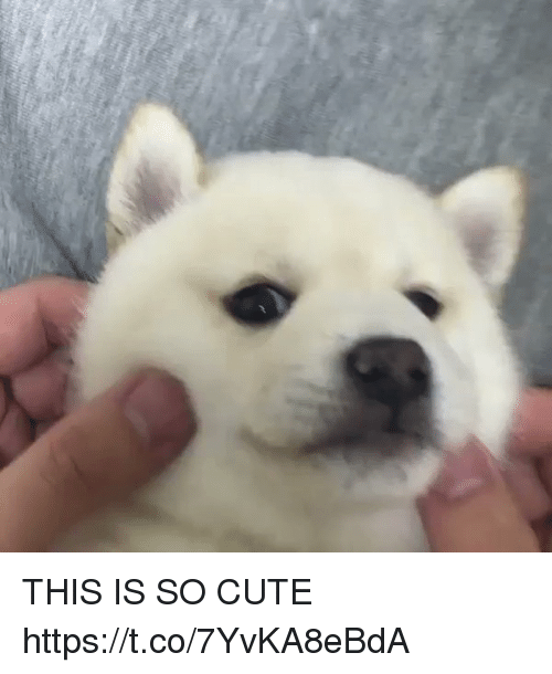 Cute, Girl Memes, and This: THIS IS SO CUTE https://t.co/7YvKA8eBdA
