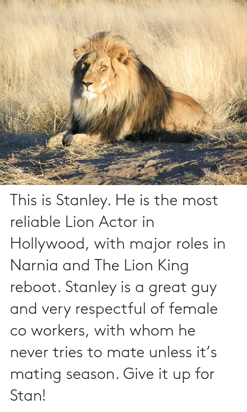 hollywood: This is Stanley. He is the most reliable Lion Actor in Hollywood, with major roles in Narnia and The Lion King reboot. Stanley is a great guy and very respectful of female co workers, with whom he never tries to mate unless it's mating season. Give it up for Stan!
