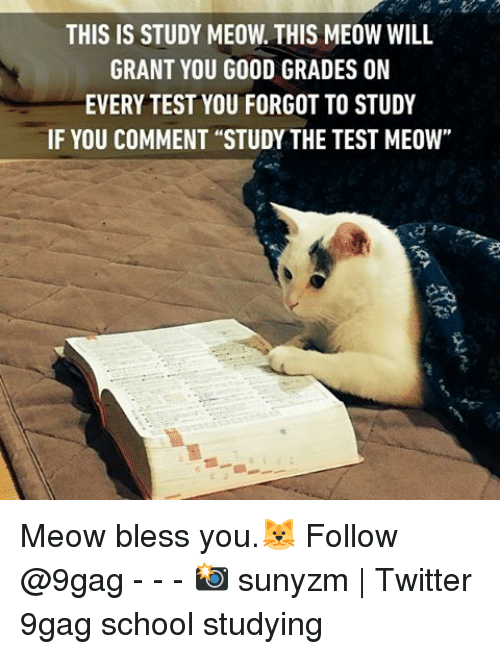 """9gag, Memes, and School: THIS IS STUDY MEOW THIS MEOW WILL  GRANT YOU GOOD GRADES ON  EVERY TEST YOU FORGOT TO STUDY  IF YOU COMMENT """"STUDY THE TEST MEOW"""" Meow bless you.🐱 Follow @9gag - - - 📸 sunyzm 