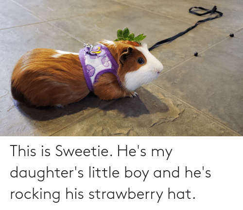 Daughters: This is Sweetie. He's my daughter's little boy and he's rocking his strawberry hat.
