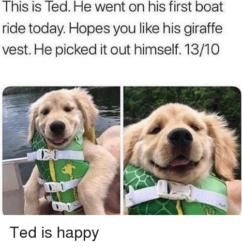 Ted, Giraffe, and Happy: This is Ted. He went on his first boat  ride today. Hopes you like his giraffe  vest. He picked it out himself. 13/10  rt Ted is happy
