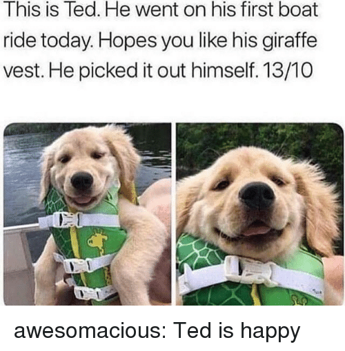 Ted, Tumblr, and Blog: This is Ted. He went on his first boat  ride today. Hopes you like his giraffe  vest. He picked it out himself. 13/10  rt awesomacious:  Ted is happy