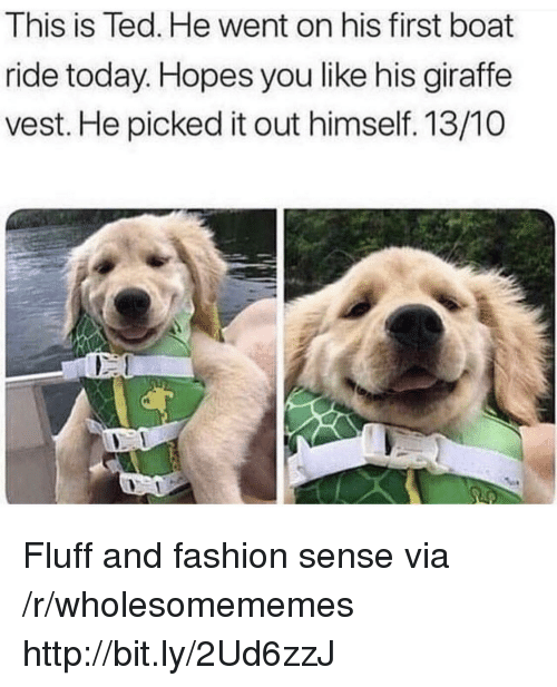 Fashion, Ted, and Giraffe: This is Ted. He went on his first boat  ride today. Hopes you like his giraffe  vest. He picked it out himself. 13/10 Fluff and fashion sense via /r/wholesomememes http://bit.ly/2Ud6zzJ