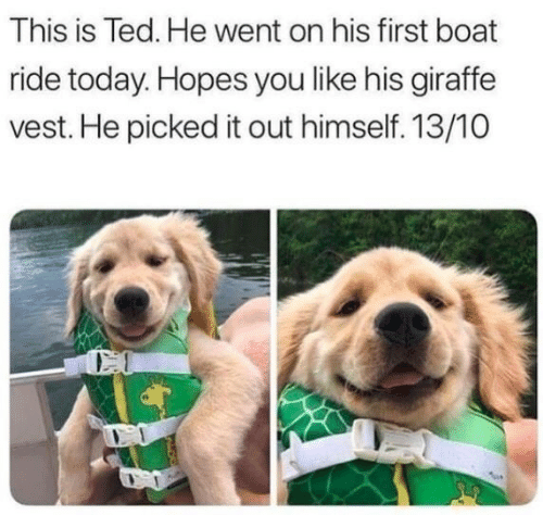 Ted, Giraffe, and Today: This is Ted. He went on his first boat  ride today. Hopes you like his giraffe  vest. He picked it out himself. 13/10