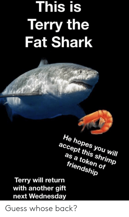 Shark, Guess, and Wednesday: This is  Terry the  Fat Shark  He hopes you will  accept this shrimp  as a token of  friendship  Terry will return  with another gift  next Wednesday Guess whose back?