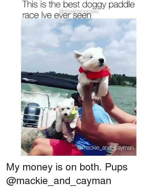 Memes, Money, and Best: This is the best doggy paddle  race lve ever seer  @doasbeingbasic  ackie_and cayman My money is on both. Pups @mackie_and_cayman