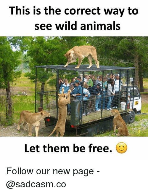 Animals, Memes, and Free: This is the correct way to  see wild animals  Let them be free. Follow our new page - @sadcasm.co