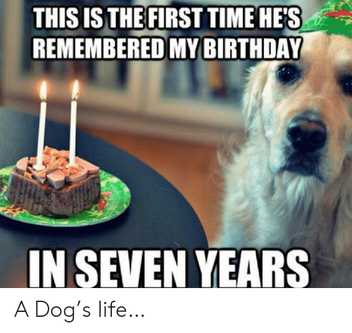 Birthday, Life, and Time: THIS IS THE FIRST TIME HES  REMEMBERED MY BIRTHDAY  IN SEVEN YEARS A Dog's life…
