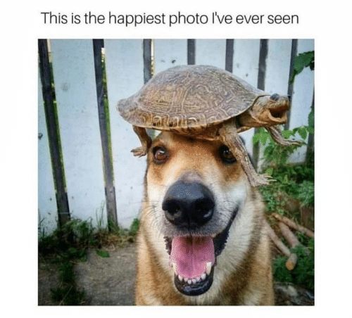 Memes, 🤖, and Photo: This is the happiest photo I've ever seen