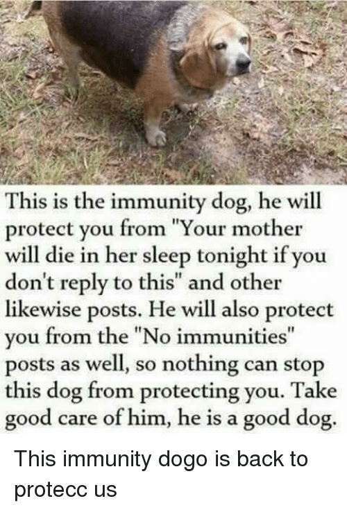 "Good, Sleep, and Back: This is the immunity dog, he will  protect you from ""Your mother  will die in her sleep tonight if you  don't reply to this"" and other  likewise posts. He will also protect  you from the ""No immunities""  posts as well, so nothing can stop  this dog from protecting you. Take  good care of him, he is a good dog. This immunity dogo is back to protecc us"