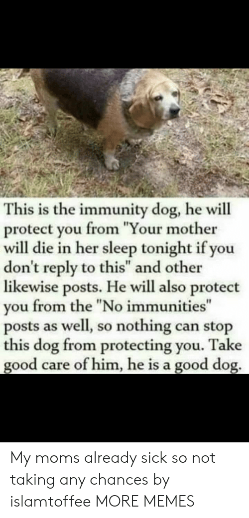 "Protect You: This is the immunity dog, he will  protect you from ""Your mother  will die in her sleep tonight if you  don't reply to this"" and other  likewise posts. He will also protect  you from the ""No immunities""  posts as well, so nothing can stop  this dog from protecting you. Take  good care of him, he is a good dog. My moms already sick so not taking any chances by islamtoffee MORE MEMES"