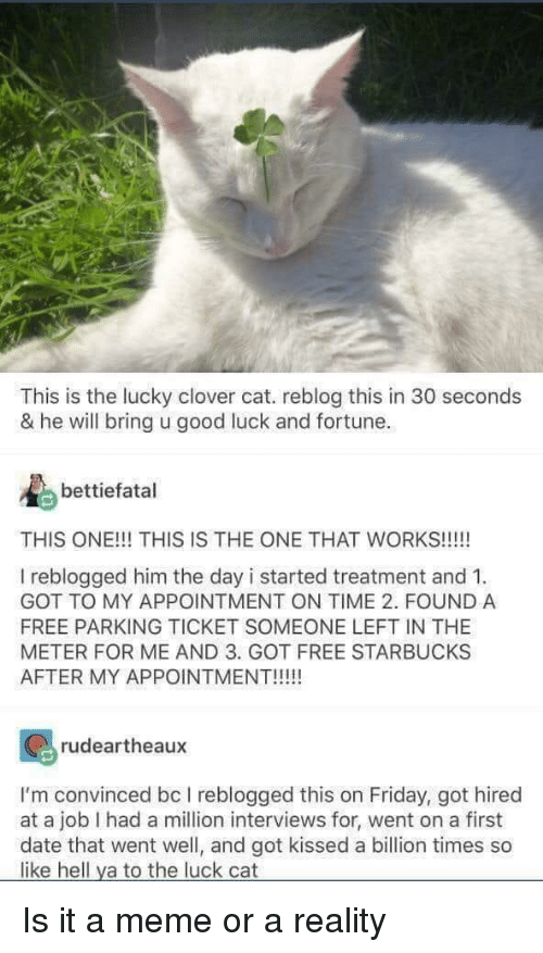 Friday, Meme, and Starbucks: This is the lucky clover cat. reblog this in 30 seconds  & he will bring u good luck and fortune.  bettiefatal  THIS ONE!!! THIS IS THE ONE THAT WORKS!!!!!  I reblogged him the day i started treatment and 1  GOT TO MY APPOINTMENT ON TIME 2. FOUND A  FREE PARKING TICKET SOMEONE LEFT IN THE  METER FOR ME AND 3. GOT FREE STARBUCKS  AFTER MY APPOINTMENT!!!  rudeartheaux  I'm convinced bc I reblogged this on Friday, got hired  at a job I had a million interviews for, went on a first  date that went well, and got kissed a billion times so  like hell ya to the luck cat Is it a meme or a reality