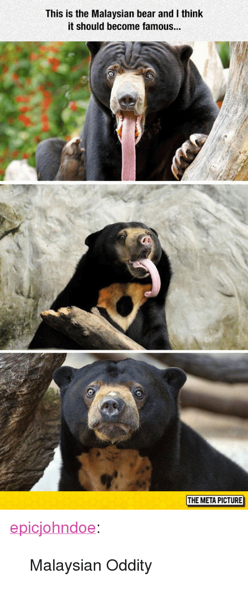 """Oddity: This is the Malaysian bear and I think  it should become famous  THE META PICTURE <p><a href=""""https://epicjohndoe.tumblr.com/post/173203426639/malaysian-oddity"""" class=""""tumblr_blog"""">epicjohndoe</a>:</p>  <blockquote><p>Malaysian Oddity</p></blockquote>"""