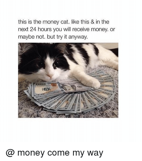 money cat: this is the money cat. like this & in the  next 24 hours you will receive money. or  maybe not. but try it anyway. @ money come my way