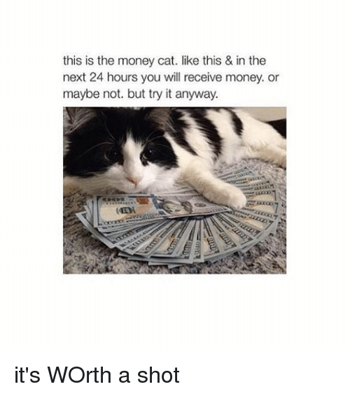 money cat: this is the money cat. like this & in the  next 24 hours you will receive money or  maybe not. but try it anyway. it's WOrth a shot