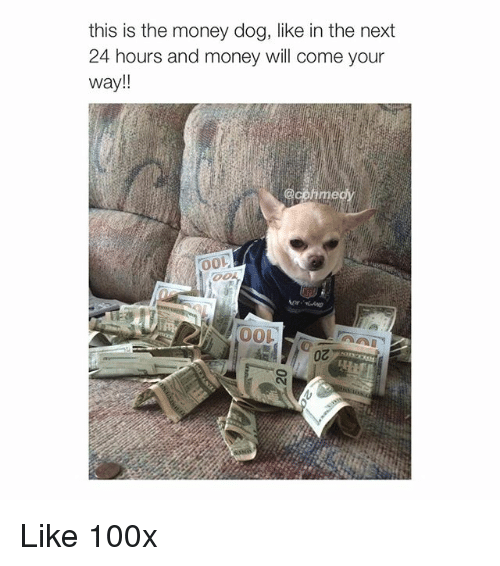 Dogs, Money, and Girl Memes: this is the money dog, like in the next  24 hours and money will come your  Way  @comme Like 100x
