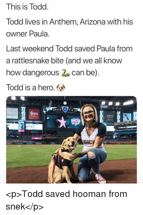 Arizona, Chase, and How: This is Todd  lodd lives in Anthem, Arizona with his  owner Paula.  Last weekend lodd saved Paula from  a rattlesnake bite (and we all know  how dangerous can be)  Todd is a hero.  CHASE  0  FIELD <p>Todd saved hooman from snek</p>