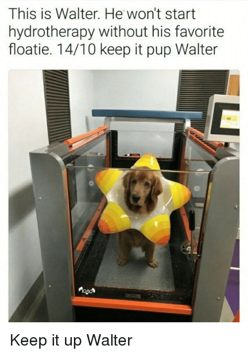Pup, This, and This Is: This is Walter. He won't start  hydrotherapy without his favorite  floatie. 14/10 keep it pup Walter <p>Keep it up Walter</p>