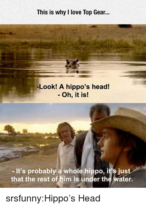 hippo: This is why I love Top Gear.  -Look! A hippo's head!  - Oh, it is!  -It's probably a whole hippo, it's just  that the rest offhim is under the water. srsfunny:Hippo's Head