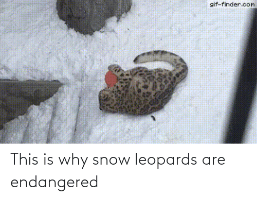 Endangered: This is why snow leopards are endangered