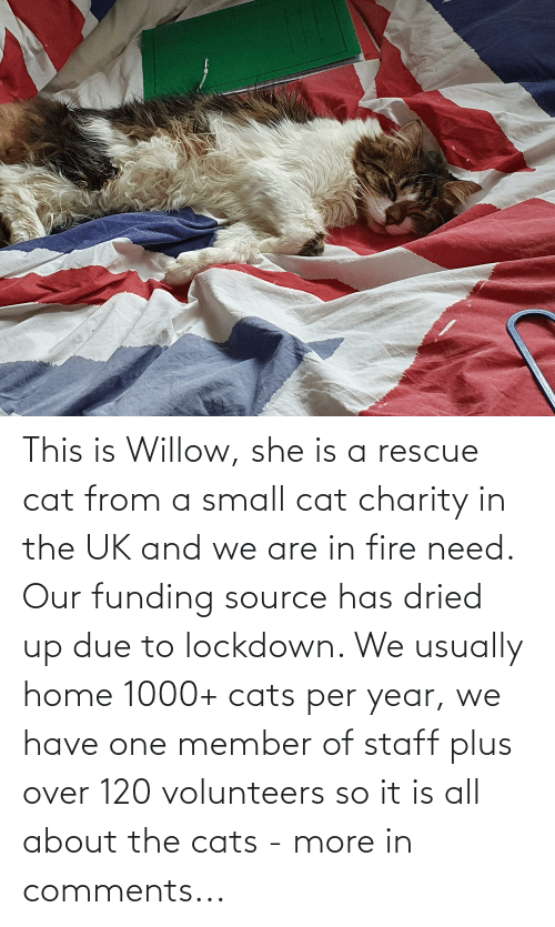 willow: This is Willow, she is a rescue cat from a small cat charity in the UK and we are in fire need. Our funding source has dried up due to lockdown. We usually home 1000+ cats per year, we have one member of staff plus over 120 volunteers so it is all about the cats - more in comments...