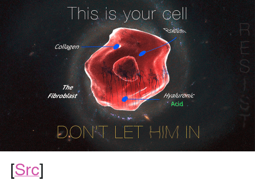 "refuge: This is your cel  Collagen  SI  The  Fibroblast  Hyaluronic  Acid  DONT LET HIM IN <p>[<a href=""https://www.reddit.com/r/surrealmemes/comments/8bkf7u/this_is_your_last_refuge/"">Src</a>]</p>"