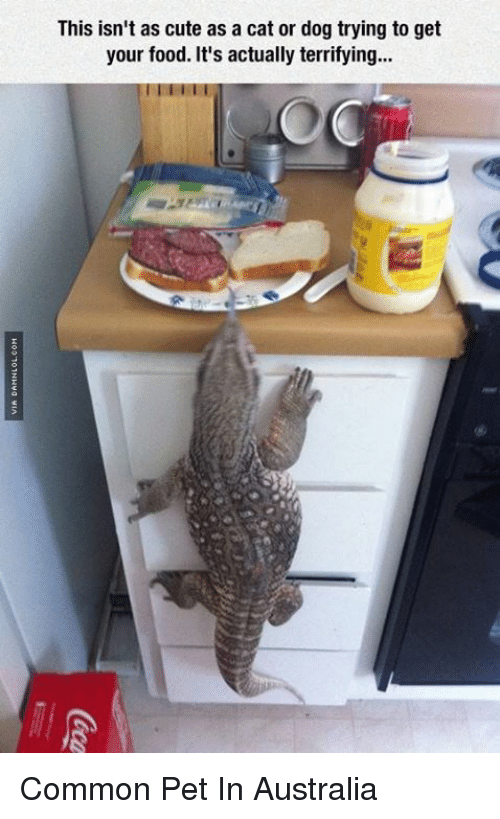 cat-or-dog: This isn't as cute as a cat or dog trying to get  your food. It's actually terrifying... Common Pet In Australia