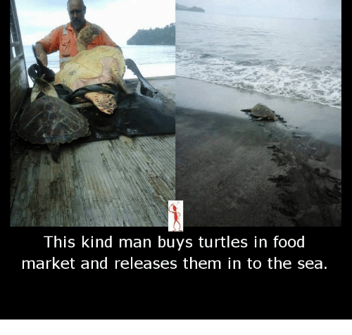 Turtling: This kind man buys turtles in food  market and releases them in to the sea.