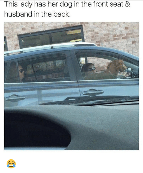 Memes, Husband, and Back: This lady has her dog in the front seat &  husband in the back. 😂