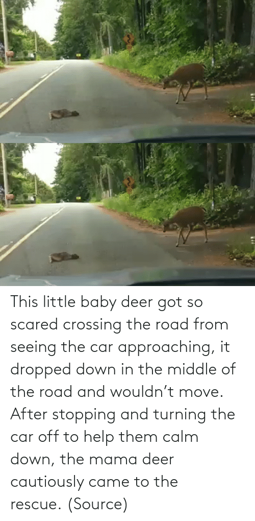 The Middle: This little baby deer got so scared crossing the road from seeing the car approaching, it dropped down in the middle of the road and wouldn't move. After stopping and turning the car off to help them calm down, the mama deer cautiously came to the rescue. (Source)