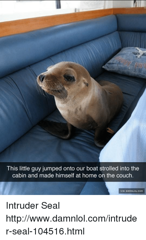damnlol: This little guy jumped onto our boat strolled into the  cabin and made himself at home on the couch.  VIA DAMNLOL.COM Intruder Seal http://www.damnlol.com/intruder-seal-104516.html