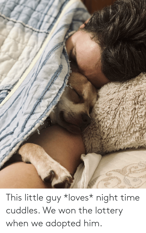Aww Memes: This little guy *loves* night time cuddles. We won the lottery when we adopted him.
